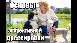 """Основы эффективной дрессировки. Курс """"Мой умный щенок"""""""