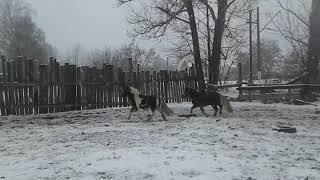 Первый снег, гонка Салюты и Милки