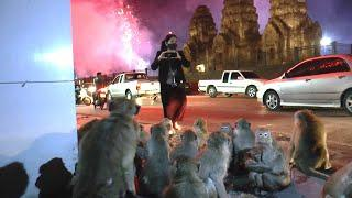 Scared Monkeys Run From Fireworks