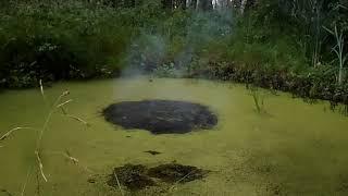 Взрываем петарды в болоте|Тест петард в воде|Моя пиротехника