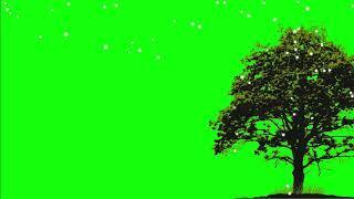 ДЕРЕВО В ОГНЯХ. Футаж. Хромакей. Зелёный экран. Chroma Key. Green Screen.