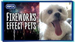 Fireworks effect Pets