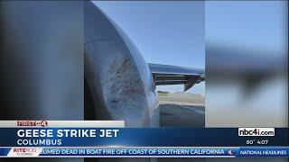 John Glenn airport uses fireworks, other devices to combat threat of bird strikes