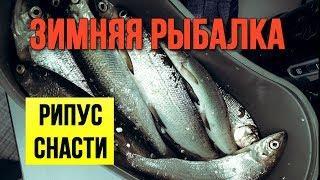 Зимняя рыбалка Рипус Какие снасти взять с собой на рыбалку