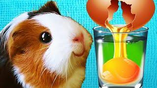 Что Будет Если Залить Яйца Разными Жидкостями Эксперименты с Едой Свинка Бузя