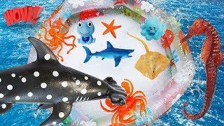 Learn Animal of Sea for Kids and Children | Shark | Dolphin | Fireworks and Bubbles