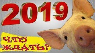ЧТО ГОТОВИТ 2019 - год Желтой Земляной Свиньи?