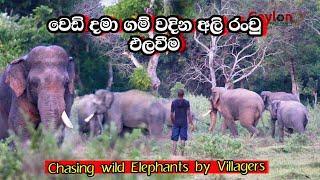 chasing elephants using fireworks  #elephant #attack
