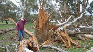 Что будет с деревом от взрыва мощной Петарды к 999?