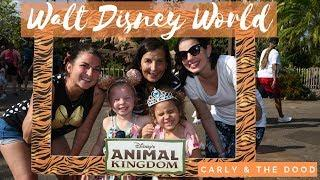 Disney World: Hollywood Studios, Sanaa, Animal Kingdom, and Happily Ever After Fireworks