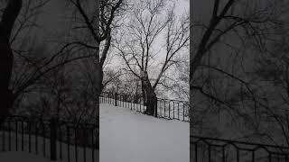 Петарды 1 января 1