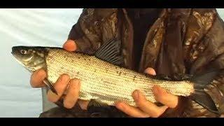 Зимняя рыбалка на реке Амур. Ловим сига на хлопушки.