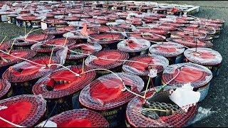 30,000 SHOTS OF FIREWORKS - ABSOLUTE INSANITY