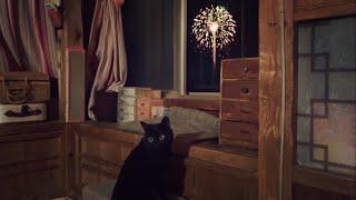 おーい、花火始まってるぞ Cat Watching Fireworks