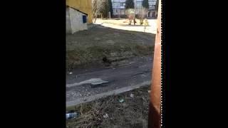 Жгут петарды №1