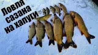 Рыбалка на сазана зимой с хапугами , рыбалка на сазана 2021 , рыбалка хапугой в Сибири. Рыбалка 2021