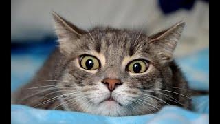 Странный кот | Веселые детские песни