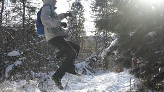 Горный лес Восточных Саян(Хамар-Дабан) после первого снега. Серия 5.