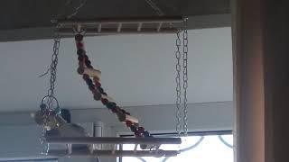 Игрушка для попугаев с АлиЭкспресс