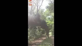 Цветной дым - Maxsem - MA0513 Black - черный- ручной - время дымления 60 сек. 30 калибр #PYROtehnik