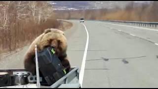 Медведь спиздил  ящик с едой