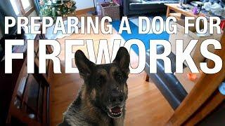 Firework Proofing A Dog - Is your dog afraid of fireworks?