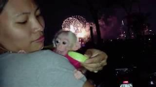Monkey baby Bon & Bi : Monkey Bi gets to see the fireworks and everyone loves Bi ❤️