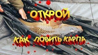 Открой для себя как ловить карпа Рыбалка Карпфишинг