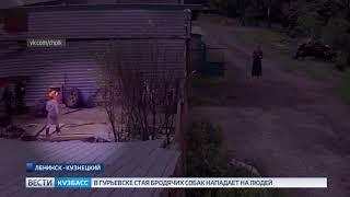 В Кузбассе маленький ребенок чуть не пострадал от взрыва петарды