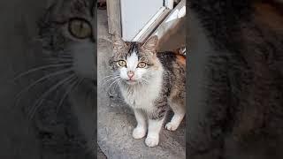 Я не кормил нашу кошку НЕДЕЛЮ