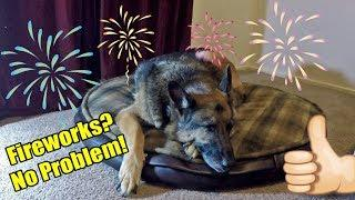 How To Keep Your Dog Calm & Safe During Fireworks