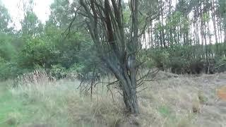 Мощная петарда vs дерево!!!