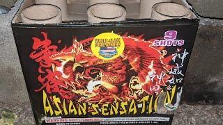 9️⃣shot 500gram: ASIAN SENSATION (World Class Fireworks)
