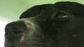 Dog recovering after being badly burned by fireworks