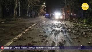 Hundreds of roosting starlings die after fireworks set off in Rome
