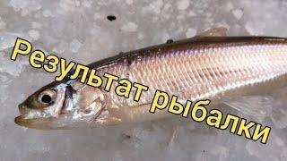 Результаты конкурса. Ловля на махалки. Подледная рыбалка. Сахалинская рыбалка & Sakhalin fishing