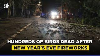 Hundreds Of Birds Found Dead After New Year's Eve Fireworks In Rome