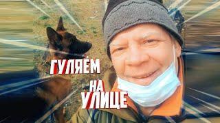 Чему собака учит человека или Как мы гуляем с немецкой овчаркой по кличке Дум