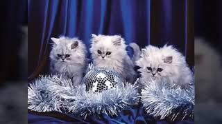 Новогодние игрушки,свечи и хлопушки.Хорошая,весёлая и новогодняя песня.С новым 2019 годом